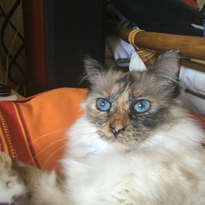 Vie de chat: Jerry ce soir dans Section de recherche sur TF1!