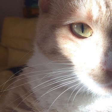 Vie de chat: Prada ne veut pas parler!
