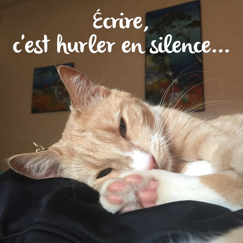 Vie de chat: adieu Prada…❤️❤️❤️😻😻😻