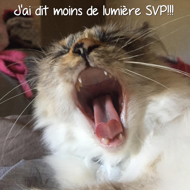 Vie de chat: Jerry n'aime pas le réveil du lundi!