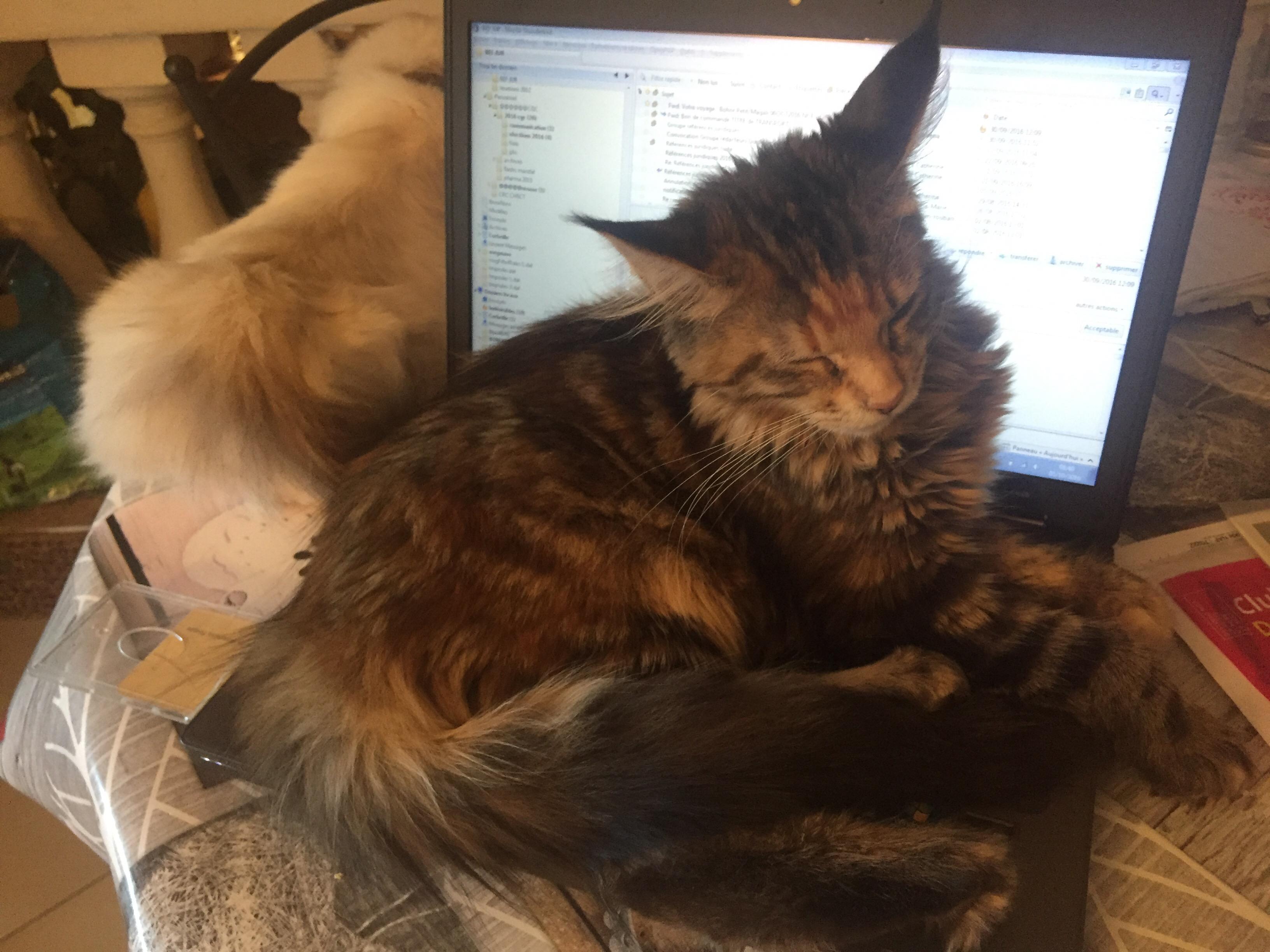 Vie de chat: Jerry et Mamour m'interdisent de bosser!