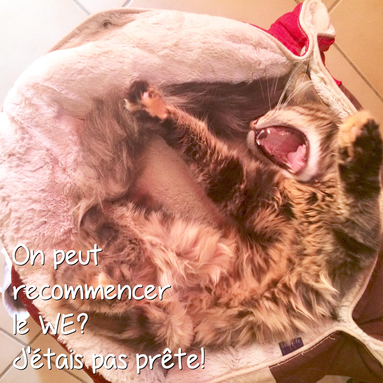 Vie de chat: Mamour n'était pas prête pour cette nouvelle semaine!