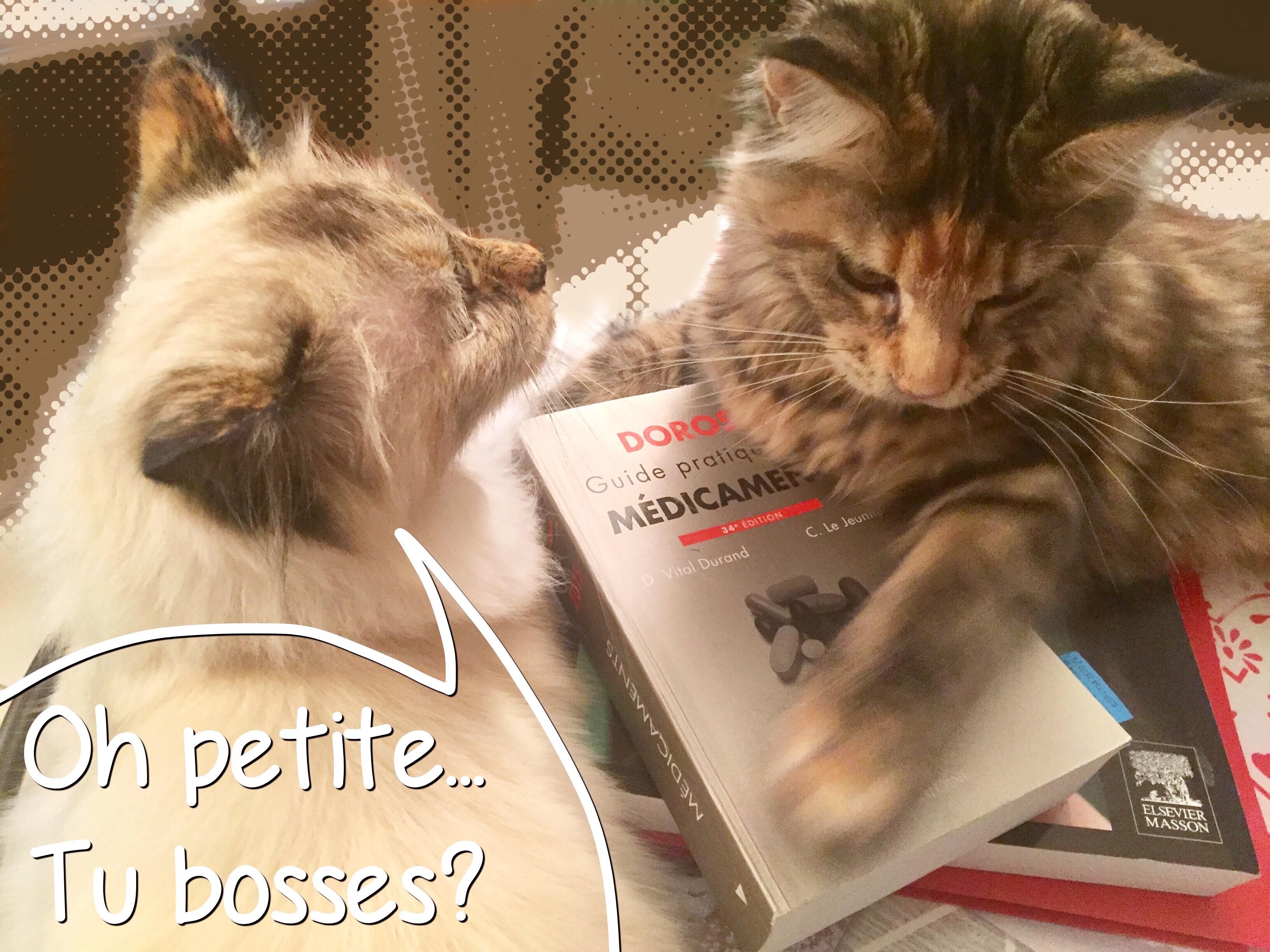 Vie de chat: Jerry fait travailler Mamour