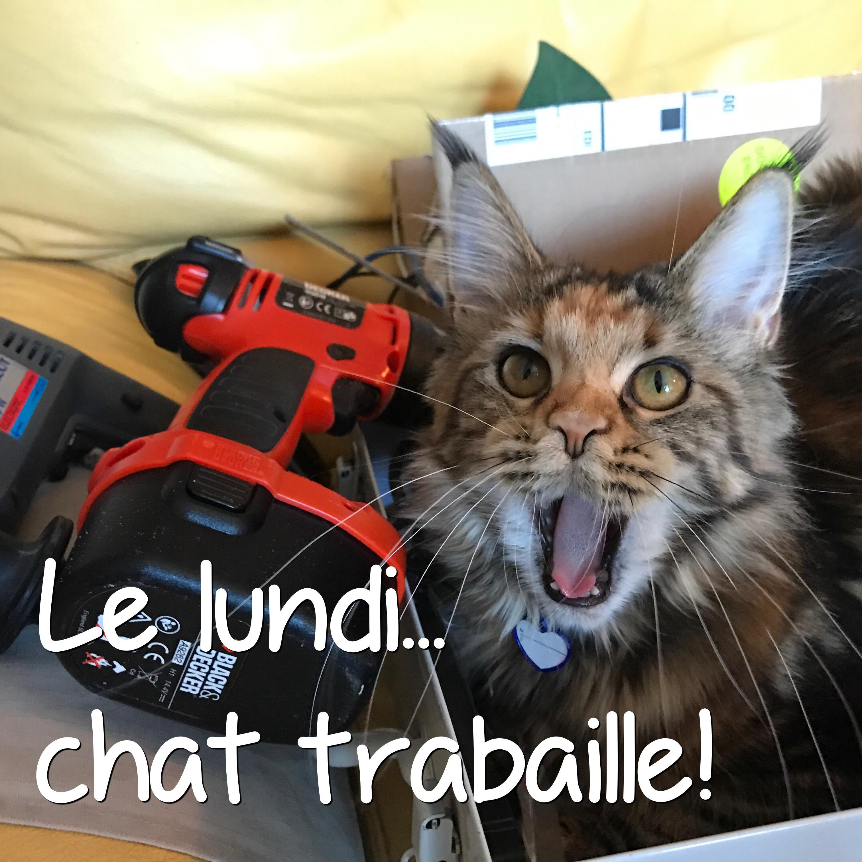 Vie de chat: Mamour en plein boulot!